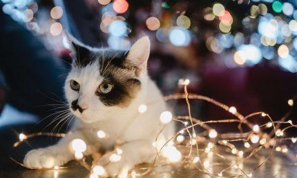 Easier christmas light set up